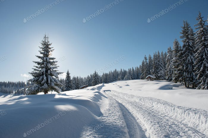 Alpine Landscape with Snow Covered Fir Trees at Winter