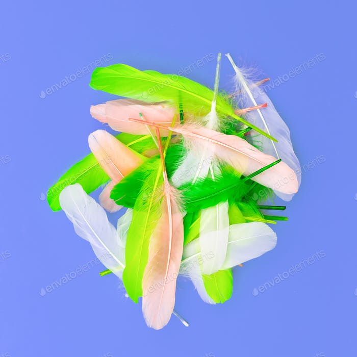 feather set candy colors minimal art design fashion