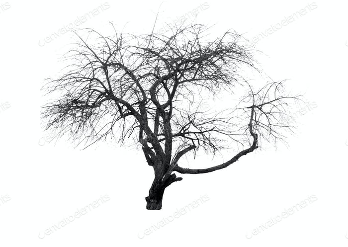 silhouette of tree
