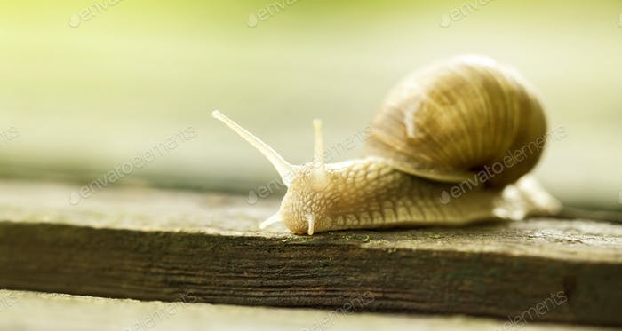 Slimy slow snail