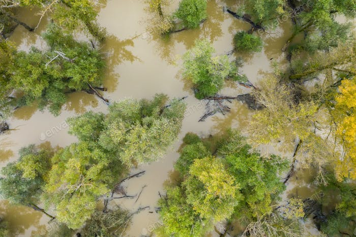 Flood in forest with green and yellow treetops from drone
