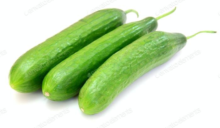 The fresh green cucumber