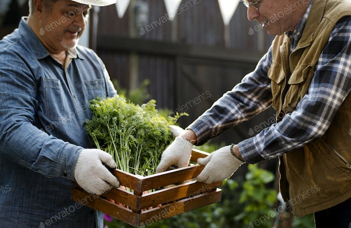 Gardener gives organic fresh agricultural product to customer