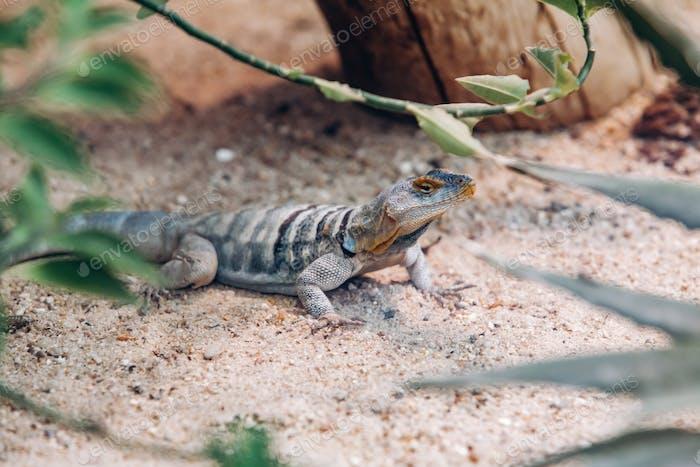 Lizard in the Park basking in the sun