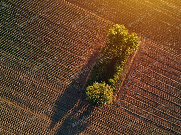 Aerial view of trees in field in sunset