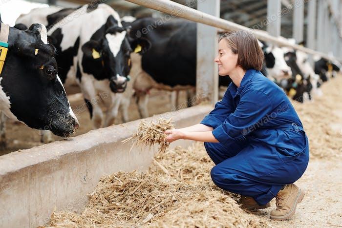 Glückliche junge Arbeiter der Viehzucht Hocken beim Halten Haufen von frischem Heu