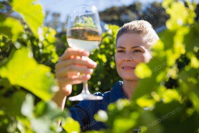 Female vintner examining glass of wine in vineyard