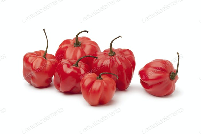 Red Scotch bonnet chili peppers
