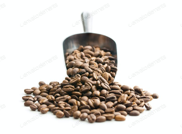 Coffee beans in metal scoop.
