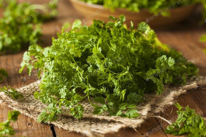 Raw Organic French Parsley Chervil