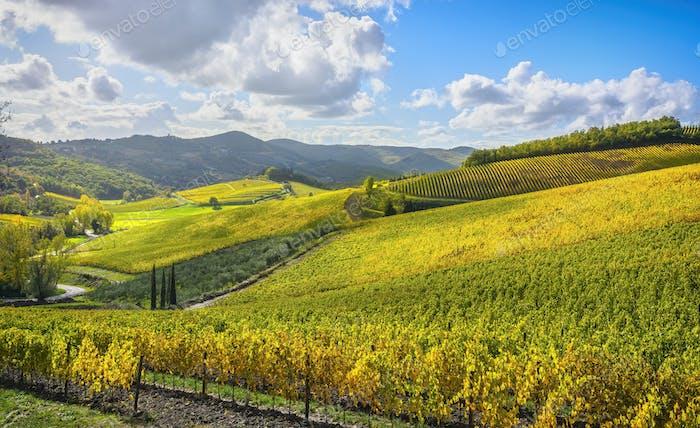Radda in Chianti vineyard and panorama. Tuscany, Italy