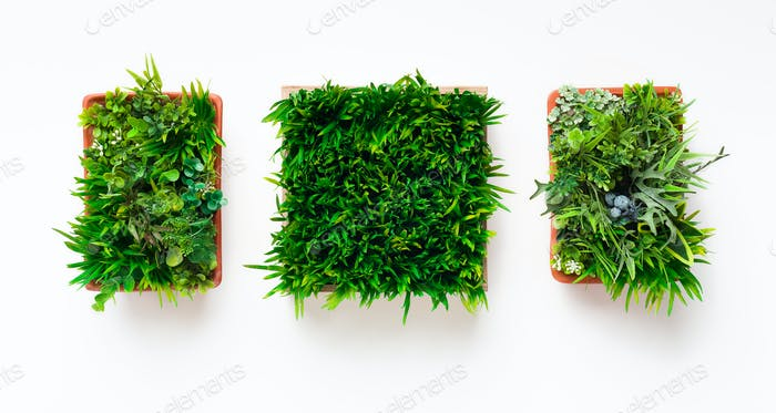 Evergreen plants in square pots on white background