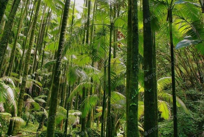 Thumbnail for Trees in Hawaii tropical botanical garden