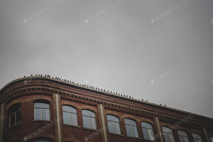 Line of Pigeons Abstract Silhouette Line on Old Brick Building R