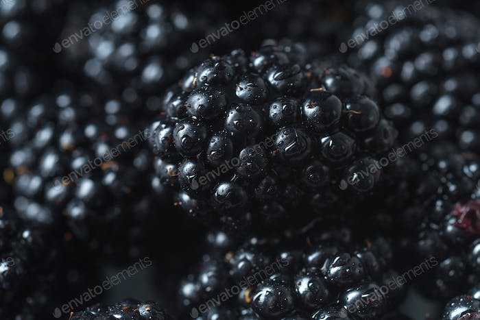 Mulberry. Focus selected. Macro.