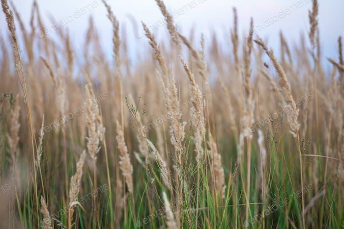 macro shot of hay field