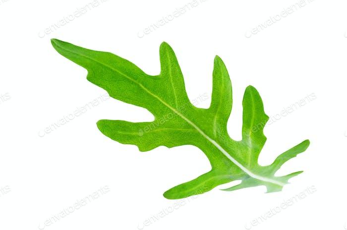 Flying arugula leaves
