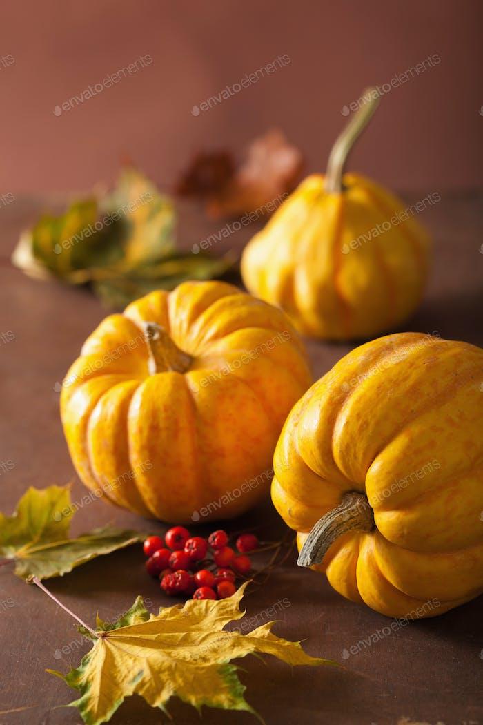 dekorative Kürbisse und Herbstblätter für Halloween