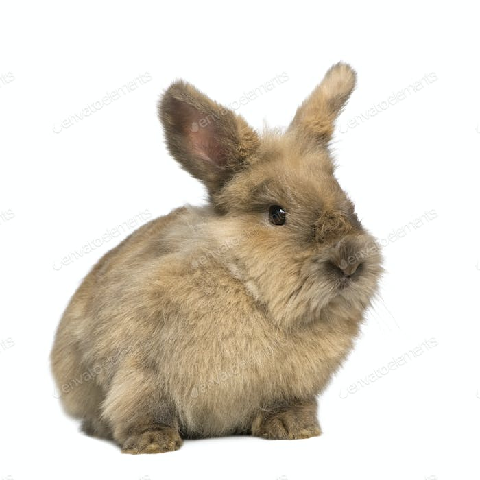 Rabbit (3 years)
