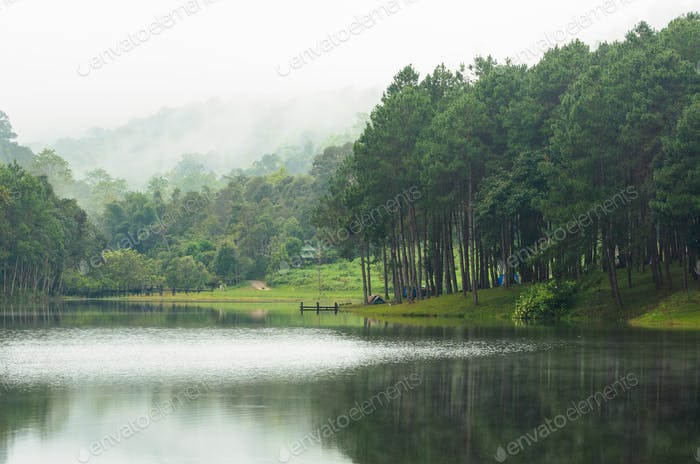 Nature landscape at morning of lakes and pine forests
