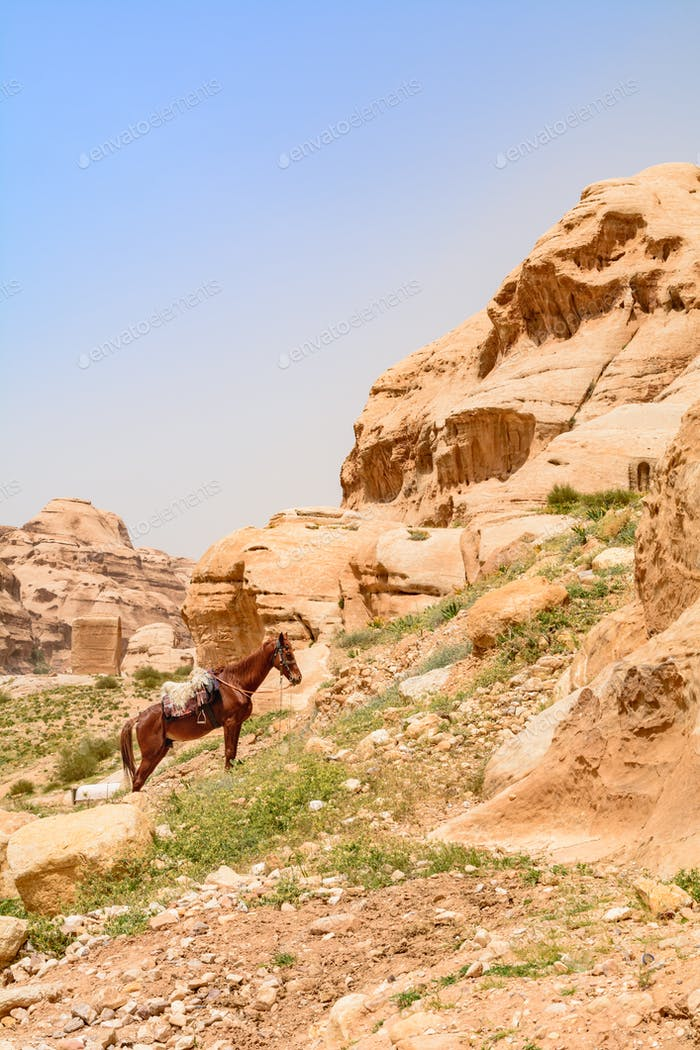 The covered horse resting on a sandstone cliff.