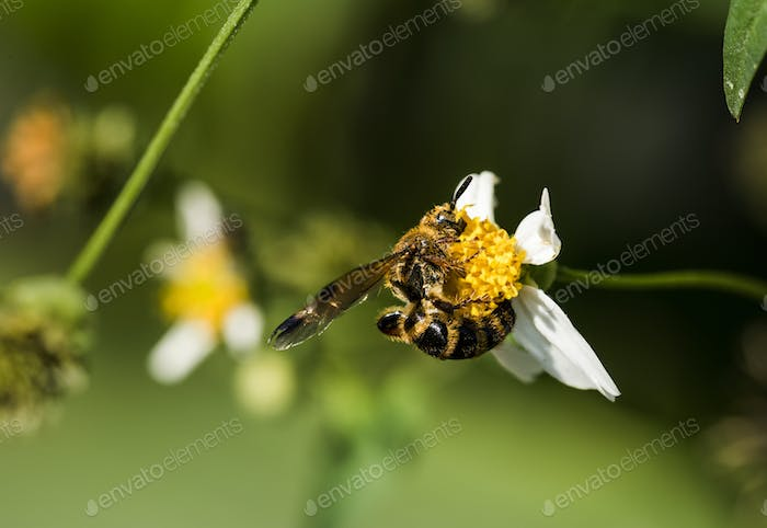 Closeup of bee and flower in the garden