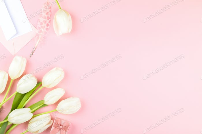 White tulip on pastel pink background. Mother's Day, Birthday, Valentine's Day.