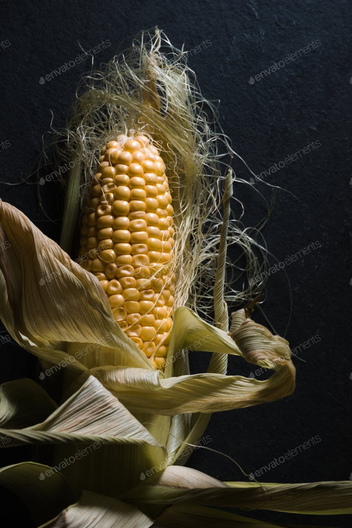 Corn with leaves on a dark gray background