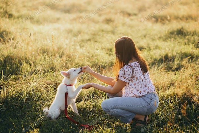 Frau Ausbildung niedlichen weißen Welpen in Sommerwiese in warmen Sonnenuntergang Licht verhalten