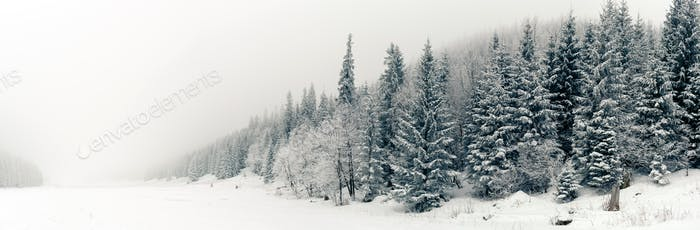 Winter white forest panorama with snow, Christmas background