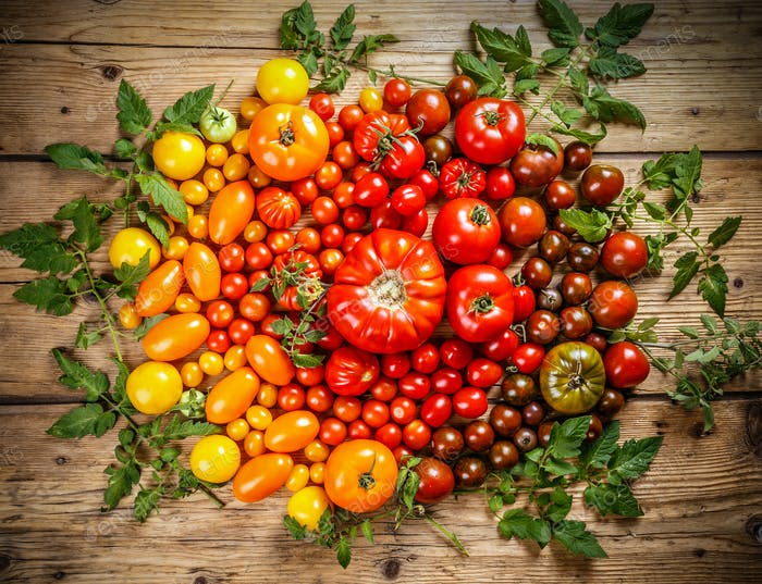 Flat-lay of fresh colorful ripe tomatoes