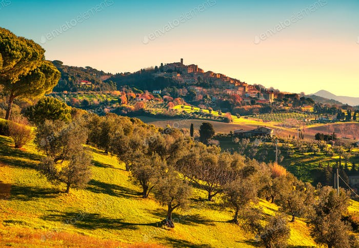 Casale Marittimo Dorf und Olivenbäume in der Maremma. Toskana, Es