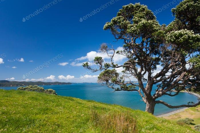 Coastal Farmland Landscape with Pohutukawa Tree