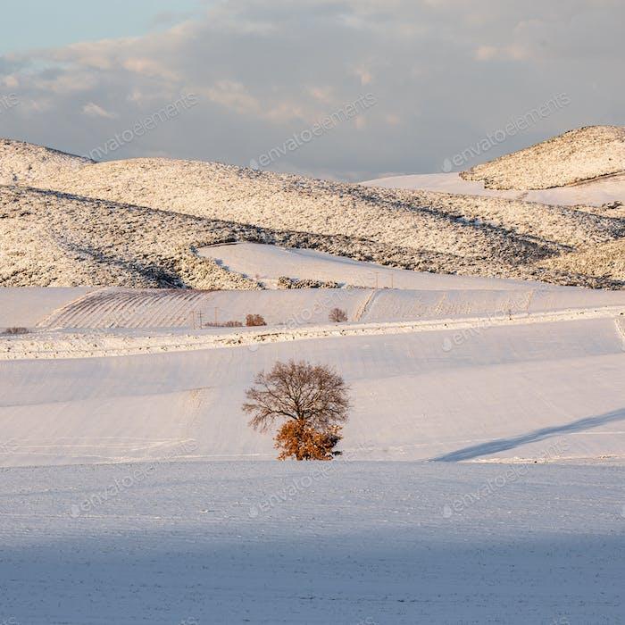 Tree In A Snowy Field  2