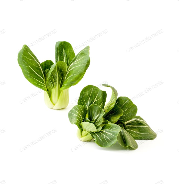 Two bunches Fresh green salad Pak-choi (Chinese cabbage) on a cl