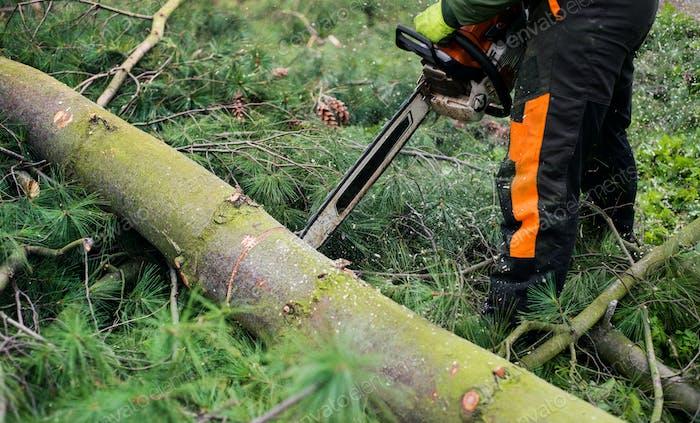 Крупный план лесоруба с бензопилой, разрезающей дерево, середина