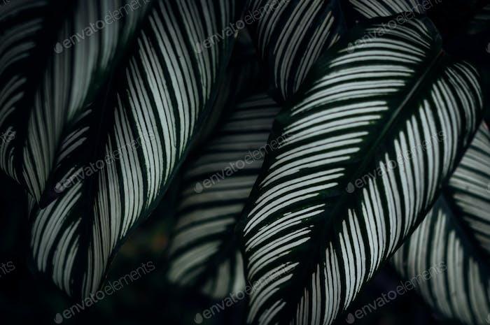 Das Streifenmuster der Blätter