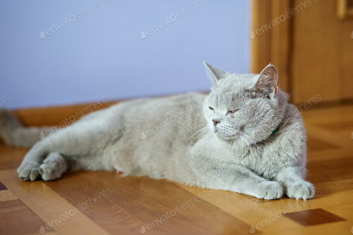 Bright cat lying on the floor. The concept of pets