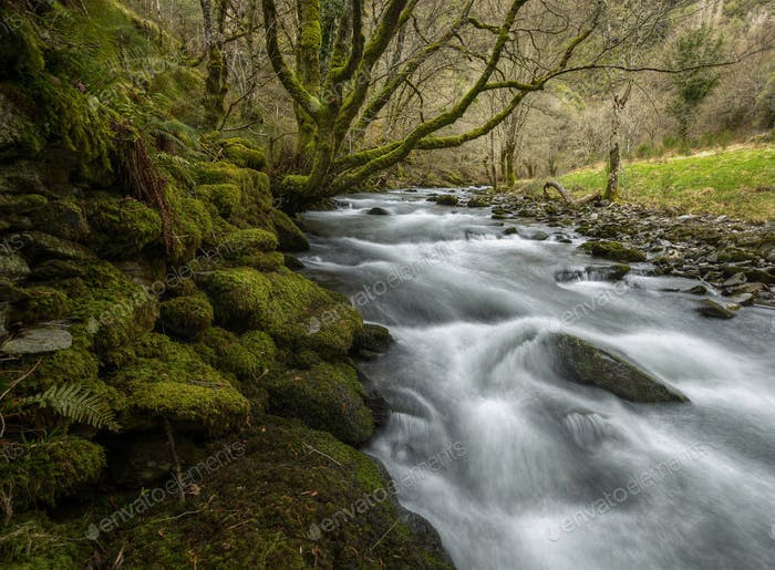 High winter flow in a river between mossy stone walls