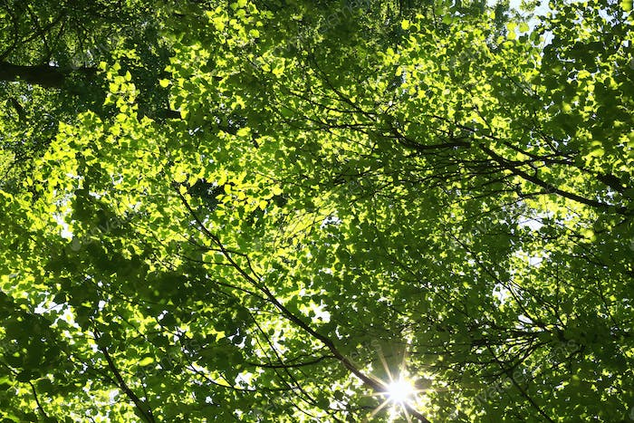 The bright sun shining through the green foliage of tall trees