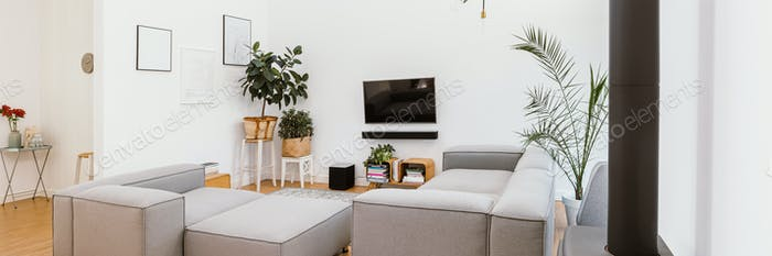 TV, pants and grey lounge furniture in spacious living room interior