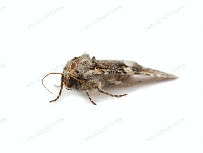 moth isolated