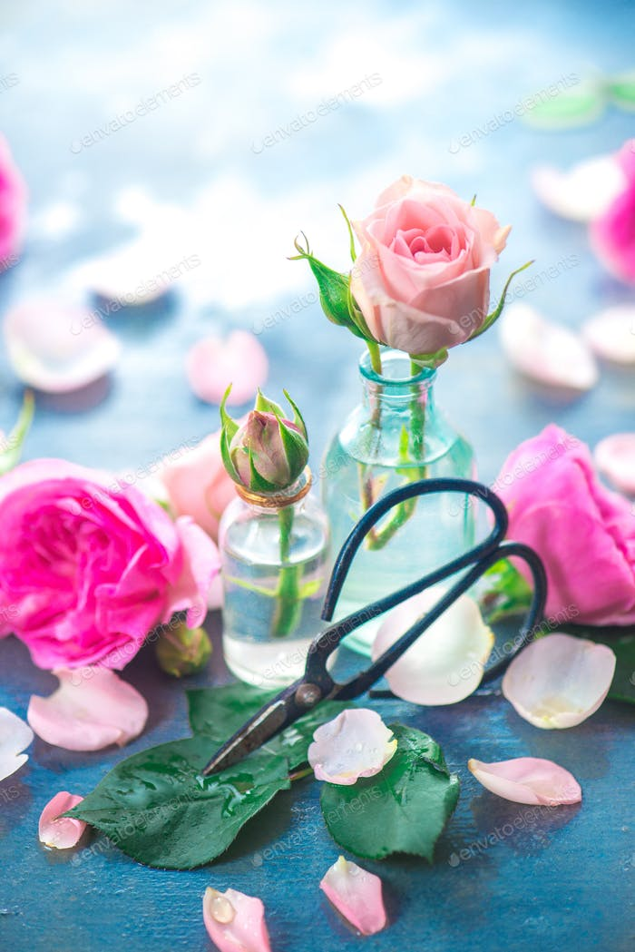 Pink roses in tiny glass bottles with Chinese gardening scissors on a neutral gray background with