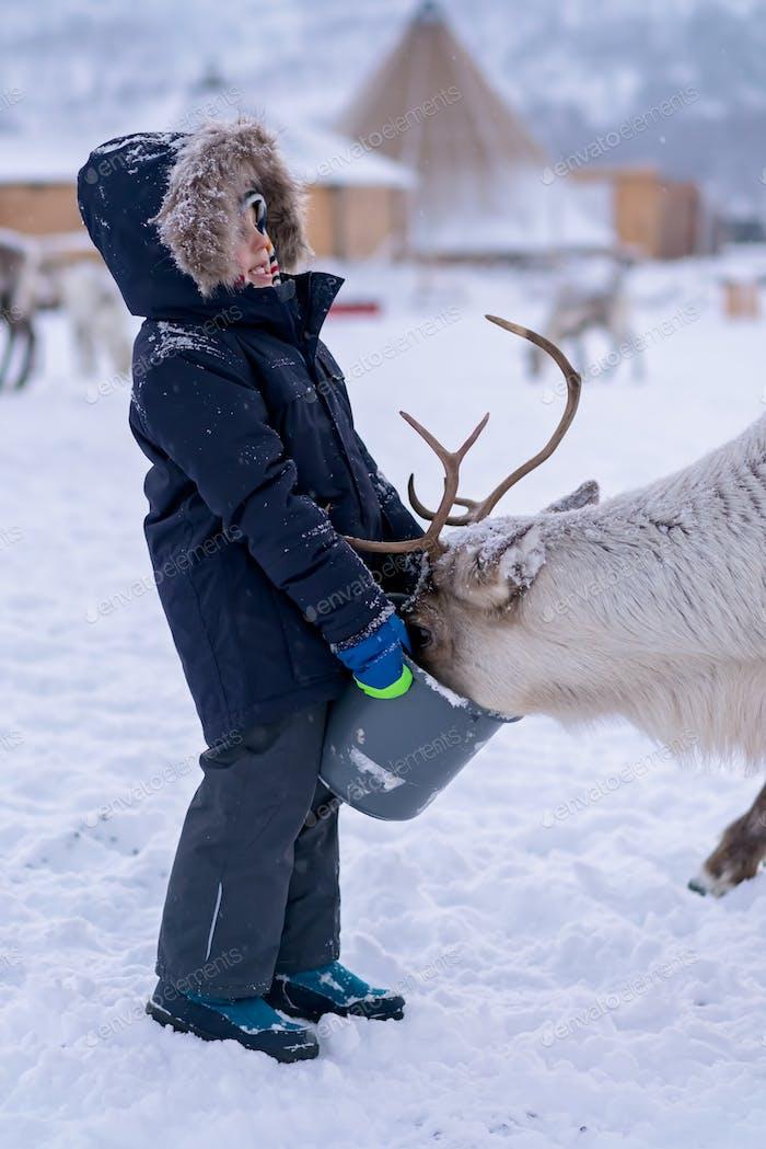 Little boy feeding reindeer in the winter