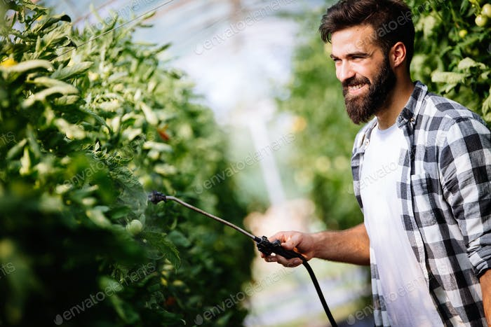 Young farmer protecting his plants with chemicals