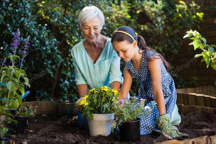 Großmutter und Enkelin Pflanzen verschiedene Blumentöpfe