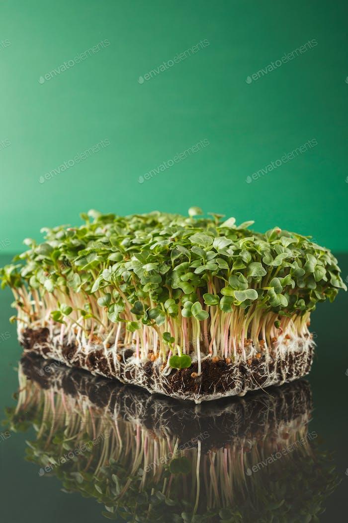 Organic growing micro greens