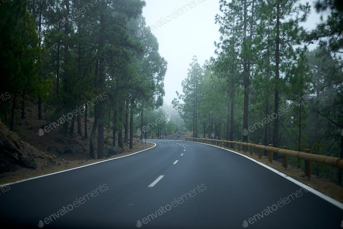 Empty road on the middle of the forest