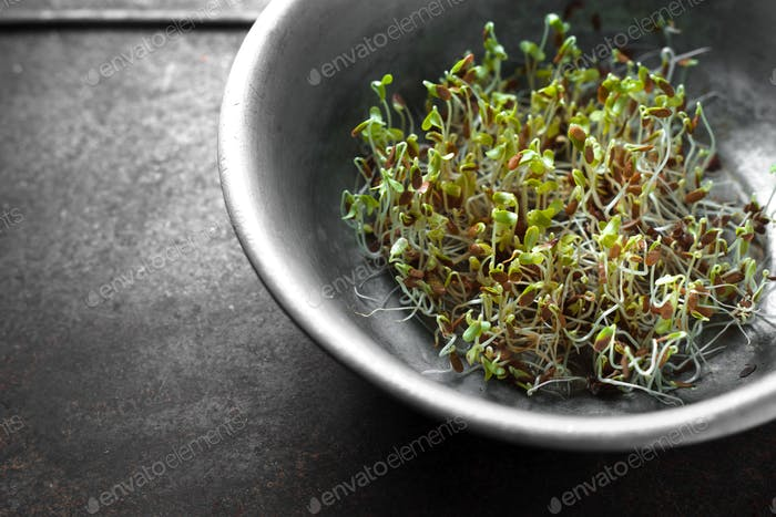 Green flax sprouts in a bowl Healthy Eating