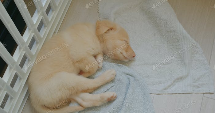 Cute puppy sleep on floor with towel